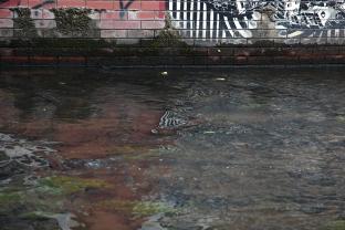 striped stream
