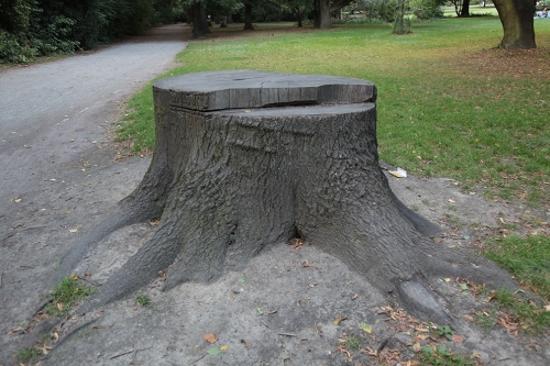 stump study3