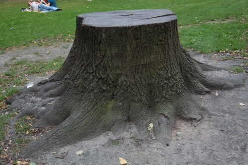 stump study5