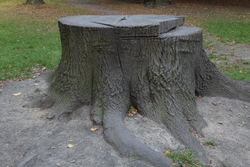 stump study8