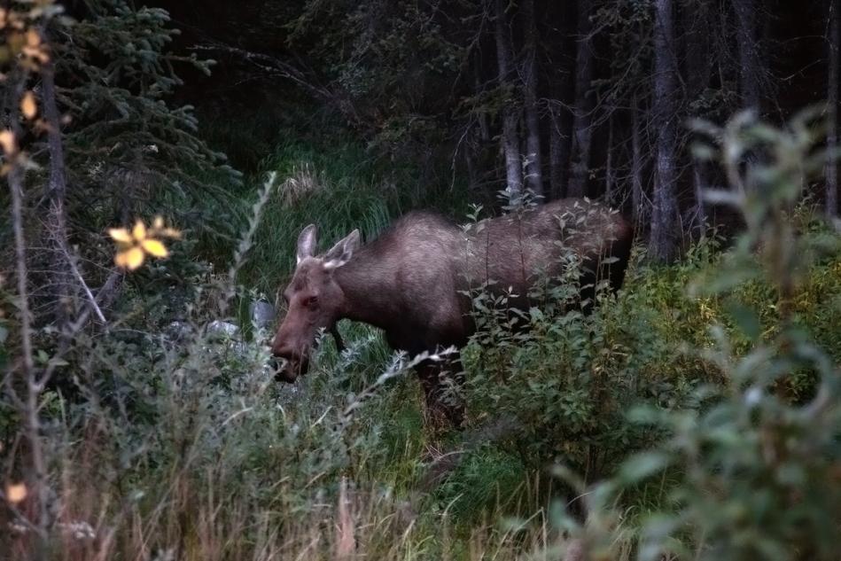 Alaska-7halfmdnt